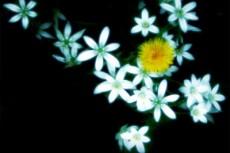 flower240
