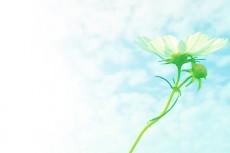 flower258