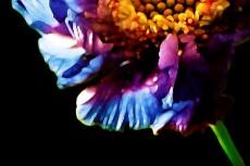 flower283