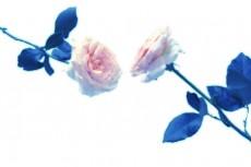 flower298
