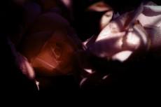 flower366