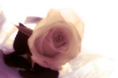 flower137_2