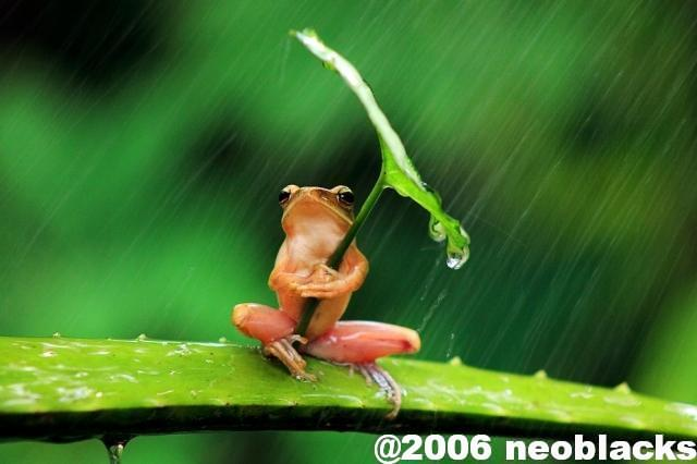 梅雨の悩みといえば・・・傘