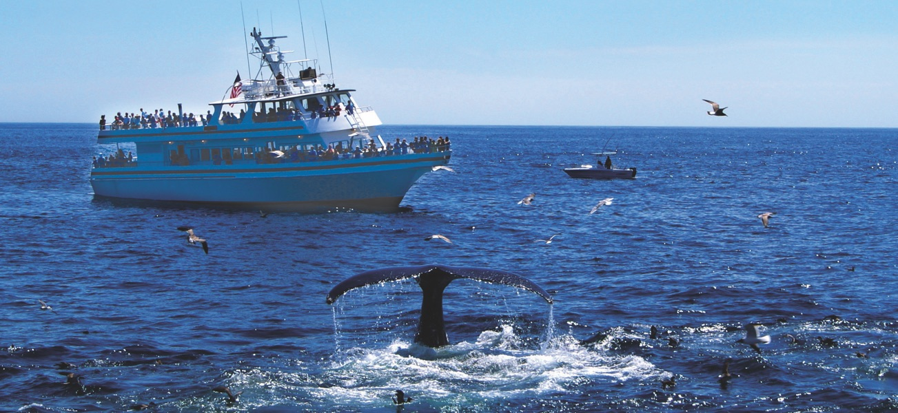 image of whale breaching with large ship in the background