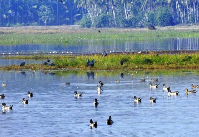 Munderi Kadavu Bird Sanctuary