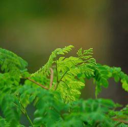 Medicinal properties of Moringa
