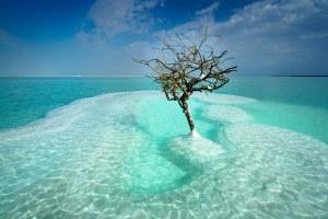A Holt-tenger gyümölcsei – Heti Grün