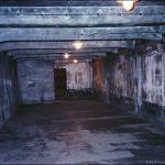 286 kivégzett zsidóra leltek egy ukrán pincében