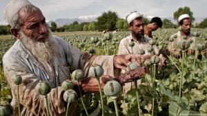 Az afganisztáni háború igazi nyertese: a tálib ópium-kereskedelem
