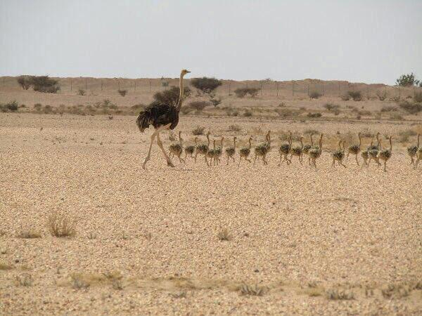 Sharaan Natural Reserve in Al-Ula 5
