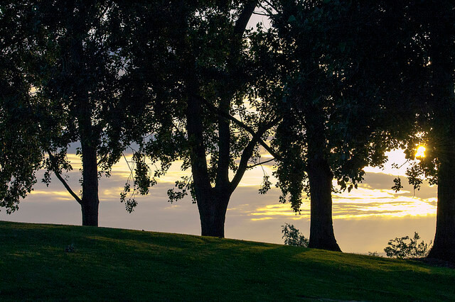 Park, Sonne, Baum
