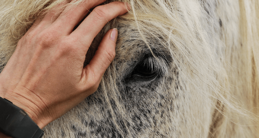 Image of a person's hand wearing a Neosensory Buzz wristband stroking the face of a white horse.
