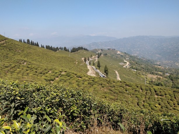 ilam kanyam tea plantation