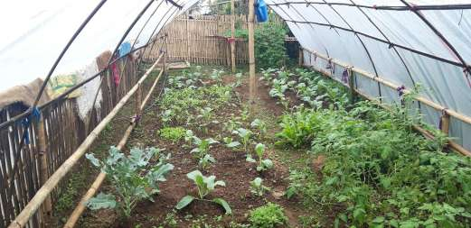 NCDF supported farmer nursery at Namsaling (2)-K300