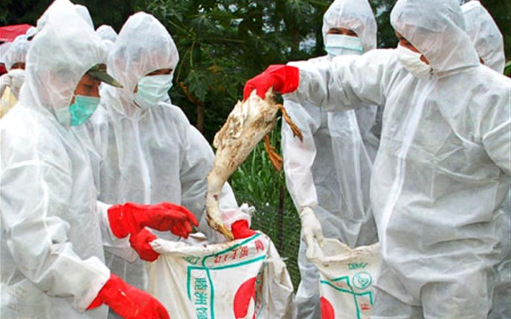 Bird flu confirmed in Taltalaiya zoo