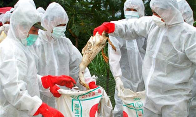 Bird flu detected in Pokhara