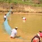 Floodwaters wash away fishes worth Rs 190 million
