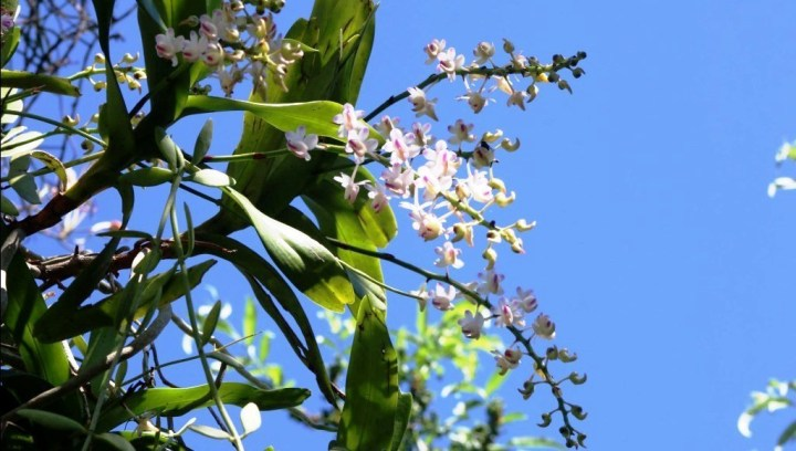 सुनाखरी फूल