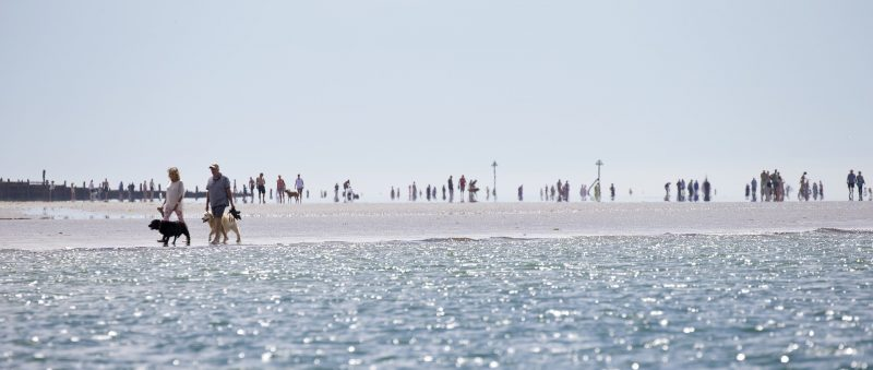 Dog Days Inspiration: dogs walking on a sunny beach