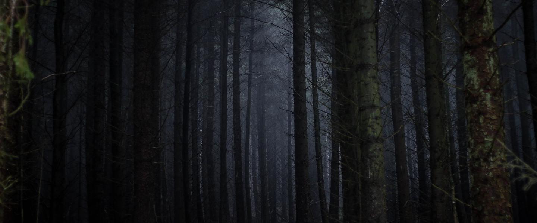 Misty woods in the dark