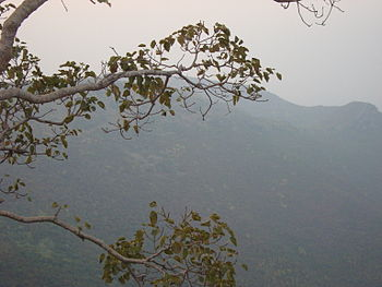 English: Forest near Rajgir, Bihar, India.