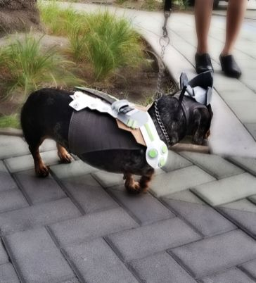Even the Dogs dressed up!