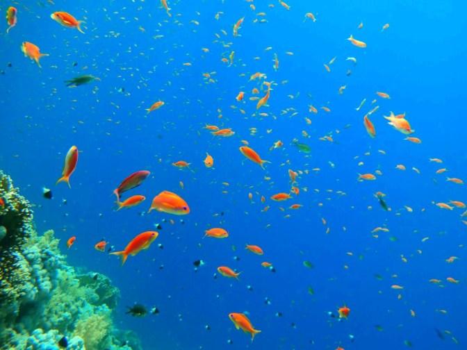 Sharm El-Sheik dalış