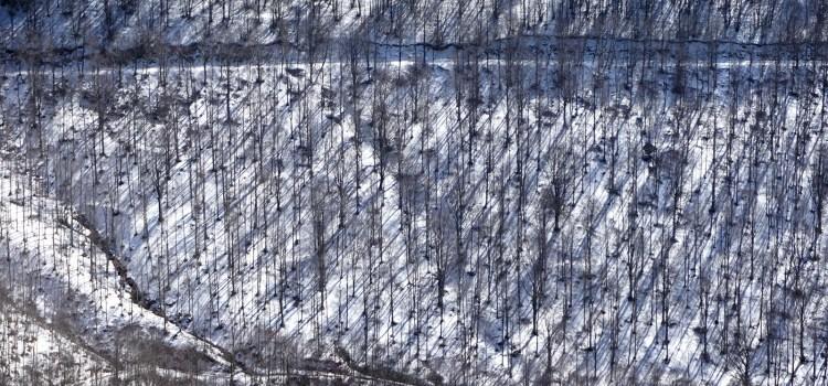Era stato un tempo di neve – Il castello di ghiaccio di Tarjei Vesaas
