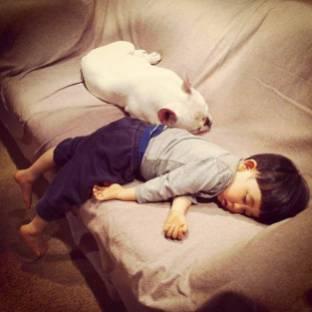 dog_friendship9