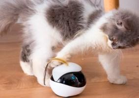 Um robô que mantém seu gato feliz enquanto você está fora de casa