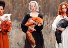 A diversidade das raposas em fotografias magníficas