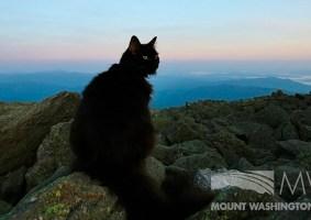 Marty, o gato que viveu por 12 anos em um observatório no cume de uma montanha