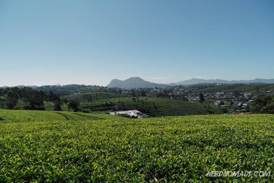 Tea_Plantation_Over_Nuwara_Eliya
