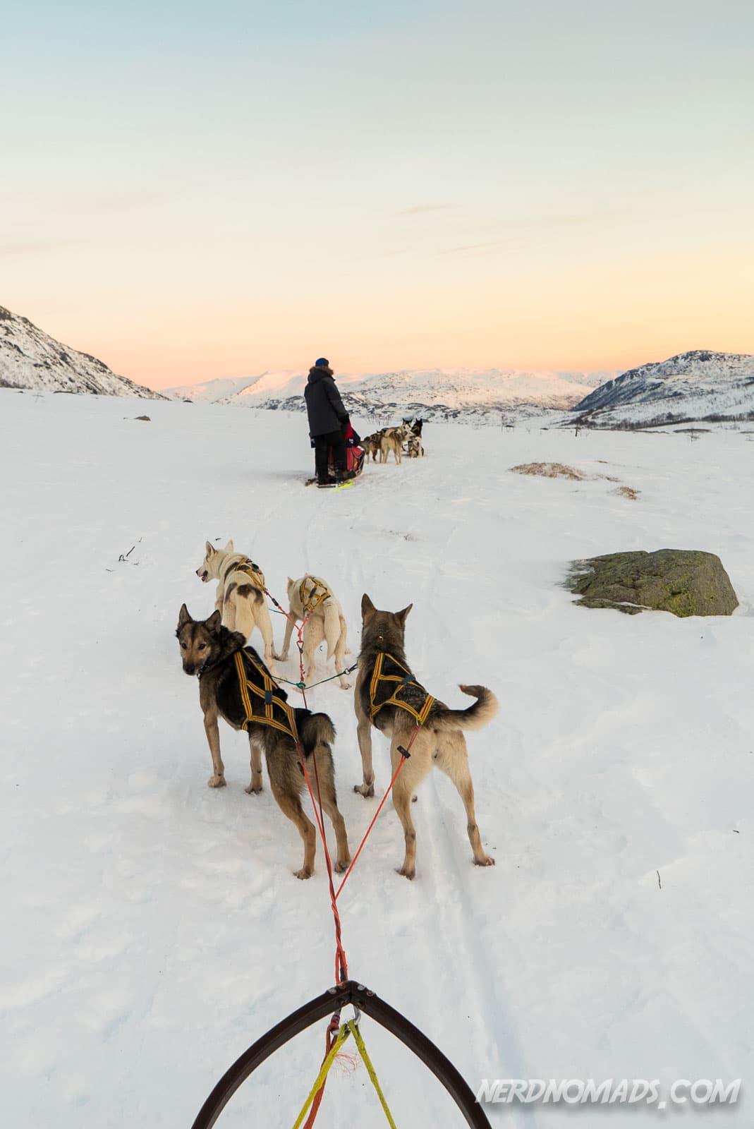 Northern Lights And Husky Sledding