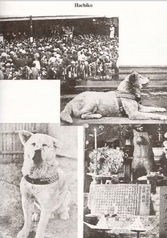 Pictures of Hachiko in the newspaper
