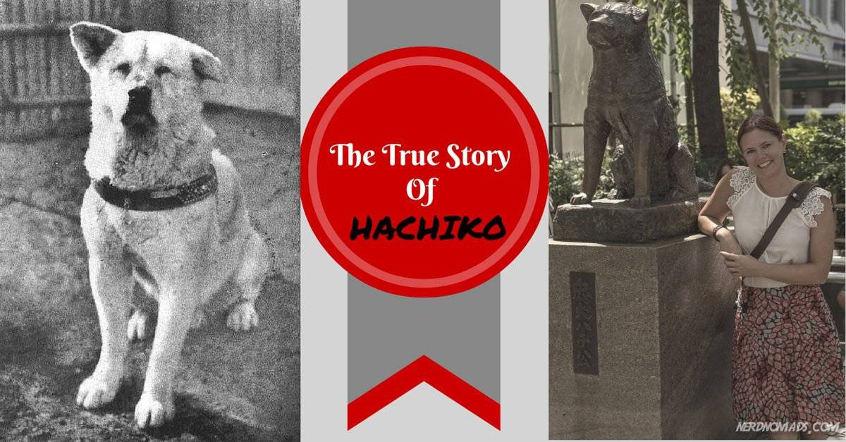 Hachiko The True Story Of A Loyal Dog Movie