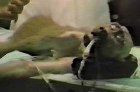 Empire-of-Madness-True-Gore-II-1989-movie-M.-Dixon-Causey-(6)
