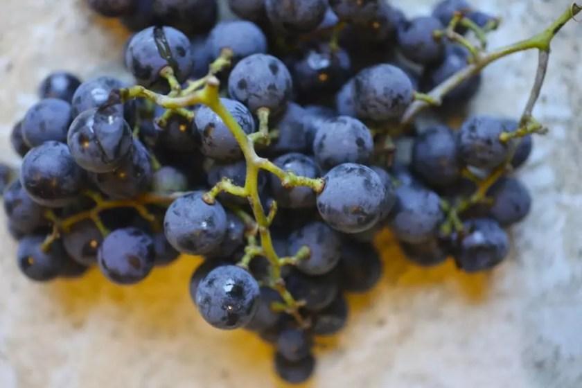 Concord Grape Gimlet