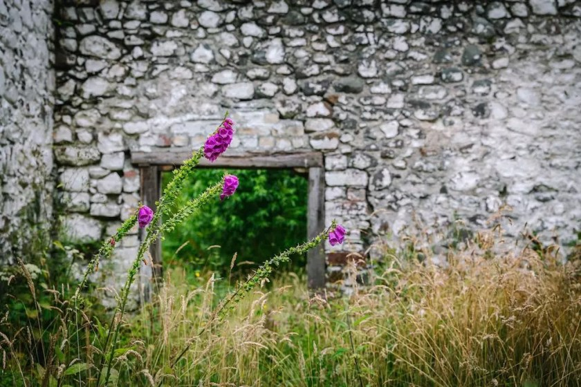 Pink flowers nodding in front of a stone wall