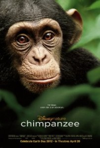 Chimpanzee Poster