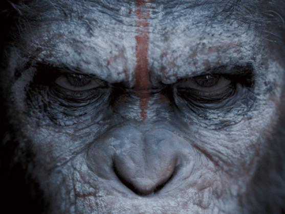 apes-eyes