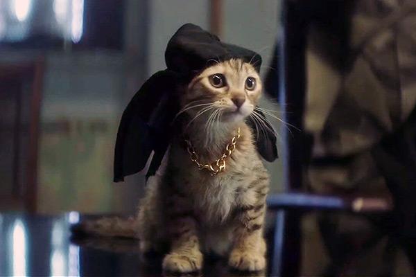 Review keanu a fun feline farce film for Best farcical films