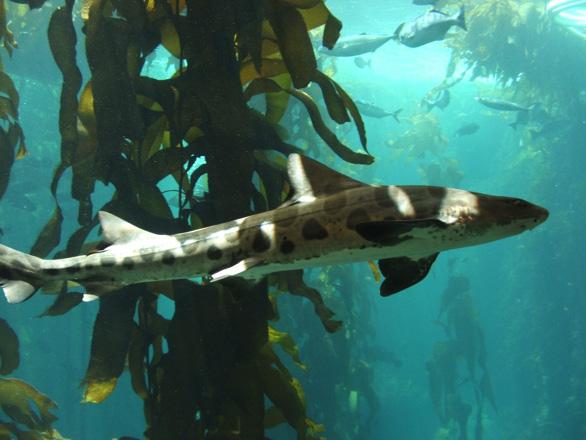 leopard shark sharknado 4 review