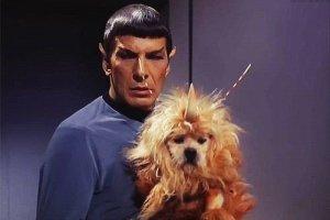 Stella the Star Trek Dog on Twitter