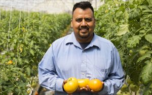 Matt Sanchez, the general manager at Abby Lee Farms in Phoenix, holds three large tomatoes grown at the facility. (Photo by Josh Orcutt/Cronkite News)
