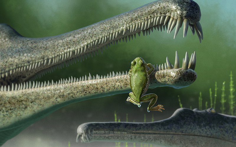 An artist's take on what a Triassic period frog may have looked like. A pelvic bone of a frog from that period was discovered last May by paleontologists, who plan to return to Petrified Forest National Park in June to search for more of these fossils. (Image courtesy Andrey Atuchin)