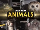star wars animals death star trench run