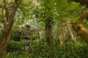 Ecologists studying the tropical rainforest biome in Biosphere 2 near Tucson say it's very similar to being in natural rainforests, which absorb carbon dioxide and release oxygen on a grand scale. (Photo courtesy of Chris Richards/University of Arizona)
