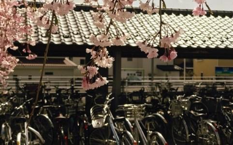 岩村田駅のさくら