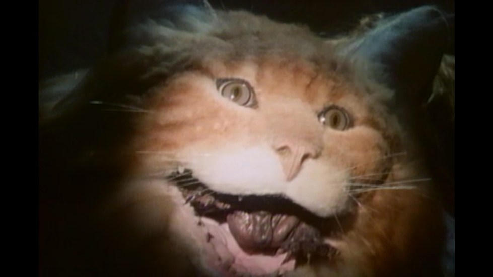 A cat that has been subjected to experiments opens its mouth to reveal a ragged monster living inside it!